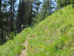Moran Basin Trail (Trail 2) in Flathead NF, July 2014 - W. K. Walker
