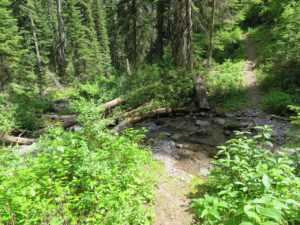 Inuya Creek Trail No. 79, Flathead NF, July 23, 2018 - W. K. Walker
