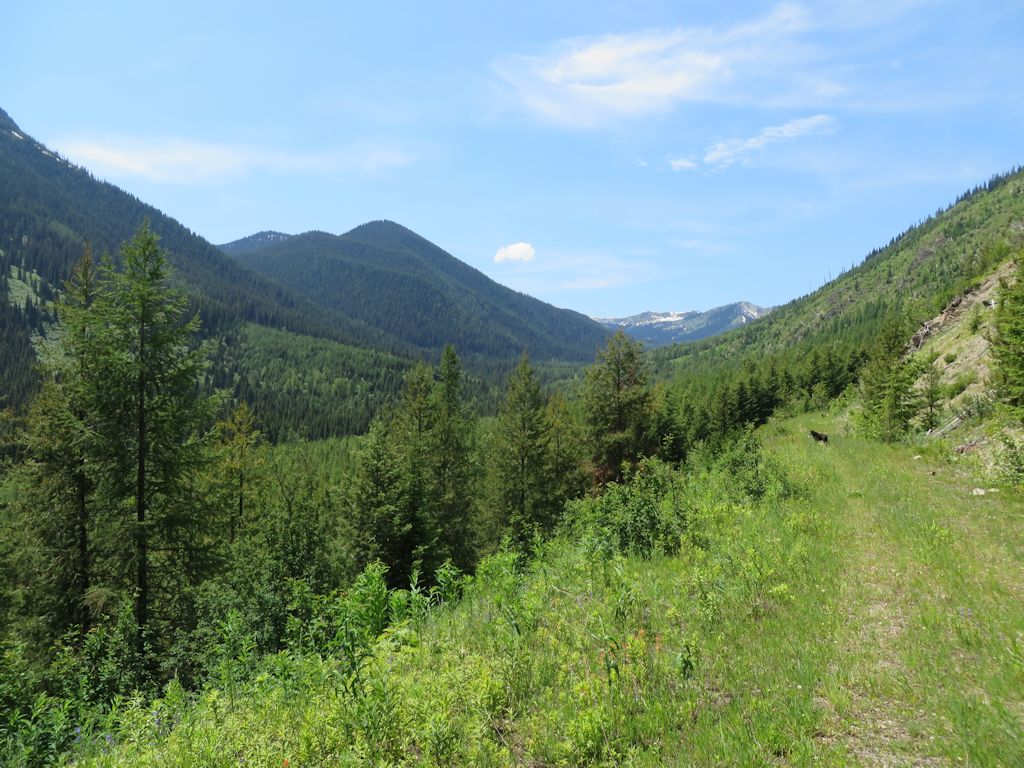 Trail 3 - looking west