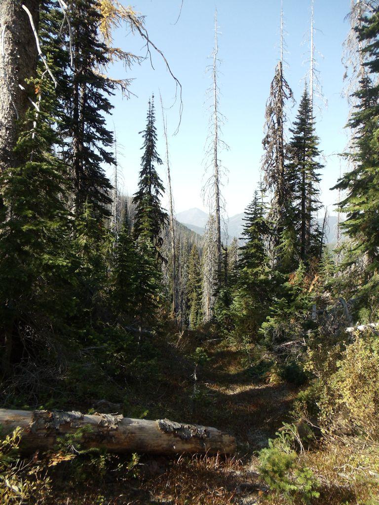 Antley Creek Trail Looking North