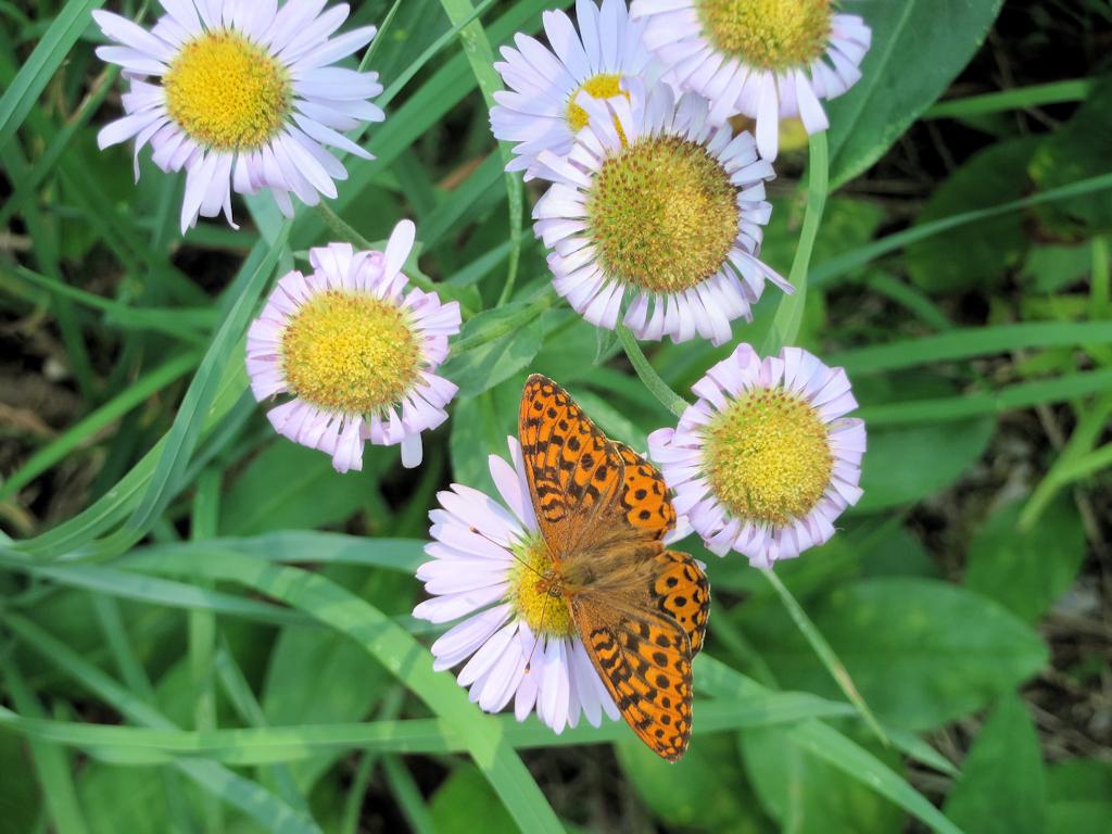 150709 - Trail 3 - Butterfly