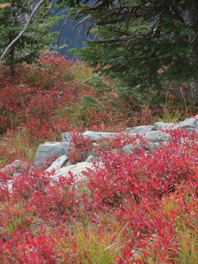 51004 - Review Mountain Loop - Fall Foliage