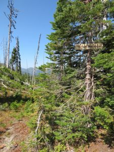 Antley Tepee Creek Trail No. 106 at ridgetop, Aug 4, 2019 - W. K. Walker