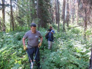 Brush Removal - Mt Hefty Trail #15 Maintenance - August 2, 2020 - W K Walker