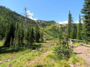 View along Nasukoin Mtn Trail #375, Aug 19, 2020 - W K Walker